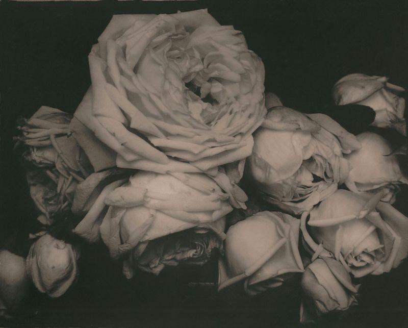 Steichen flowers